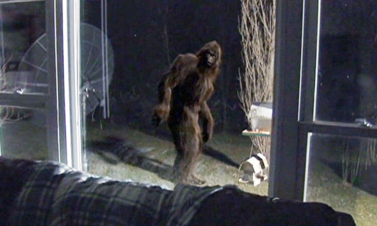 Bigfoot in New Jersey