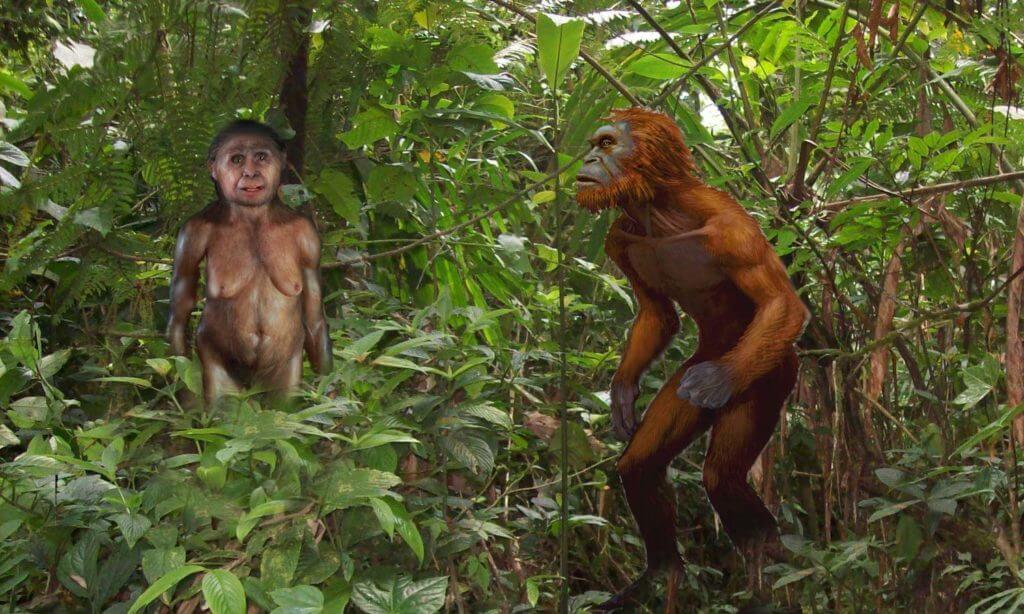 Homo Floresiensis and Orang Pendek