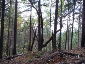 creepy woods around SOHA