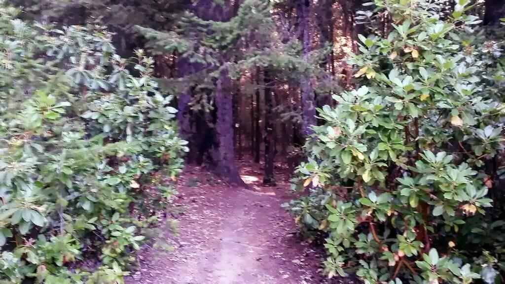 path to the gifting bowl area in the woods