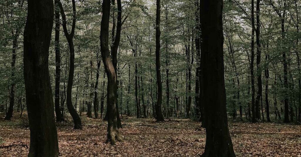 creepy forest photo