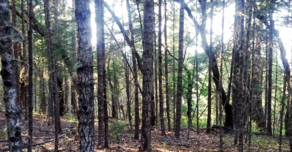 Bigfoot forest surround the SOHA site