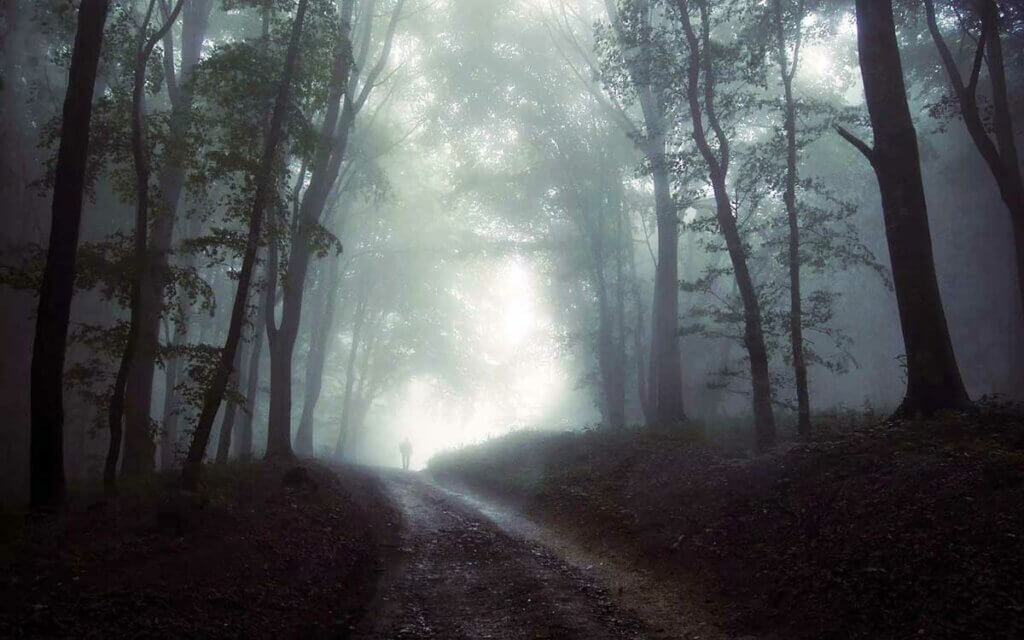 traveling a dark forest path